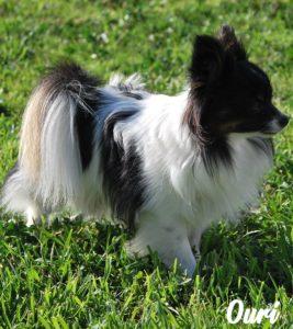 Elevage de chiens à St gilles 30800